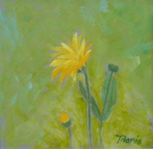 Maximillian Sunflower Study